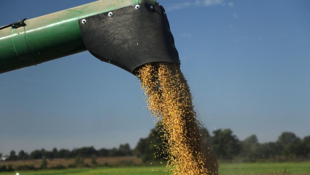 U S  seed sellers push for limits on Monsanto, BASF weed killer